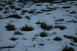 winter-kaninchen-ernährung