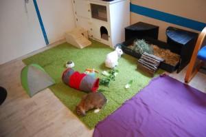 wohnung kaninchen artgerecht