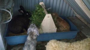 zeitungsbox Brennholzkiste kaninchenraufe