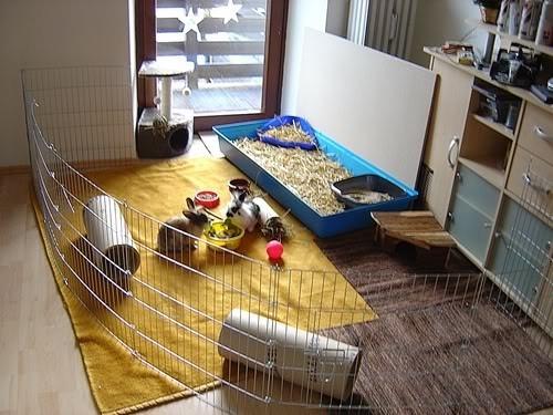 zimmer kaninchengehege kaninchenwiese. Black Bedroom Furniture Sets. Home Design Ideas