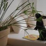 Zimmerpflanzen-Liste