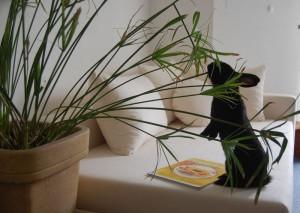 zimmerpflanzen kaninchen
