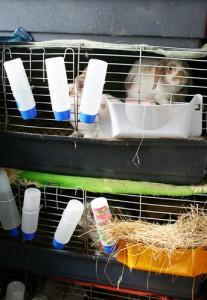 zoohandelkaninchenzucht