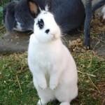 Woran man einen Kaninchenhalter erkennt
